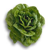 Семена салата Клаудиус 1000 с