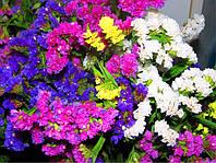 В продаже семена цветов (петуния, целозия, астра, колеус, львиный зев)