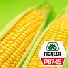 Семена кукурузы   Р8745