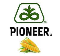 Семена кукурузы  Р9074 з премиальною обработкою