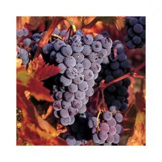 """Салфетка 33х33см (1шт) """"Солнечный виноград"""" фото"""