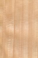 Шпон Анегре (Танганьика) Крашеный Tabu Арт. 01.009