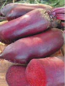 Семена свеклы Цилиндра 500 г