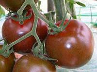 Семена томата Шоко Биг