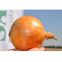 Семена лука репчатого Спениш Медальон F1 (250 000 сем.) Sakata