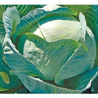 Семена капусты б/к Лексикон F1 (2500 сем.)