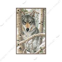 Набор для вышивания крестом 'DIMENSIONS' 03228 'Зимний волк'