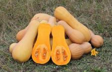 Семена тыквы Арабатский 1 кг