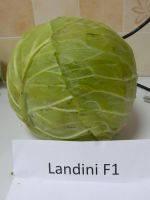 Капуста Ландіні F1 2500 н.