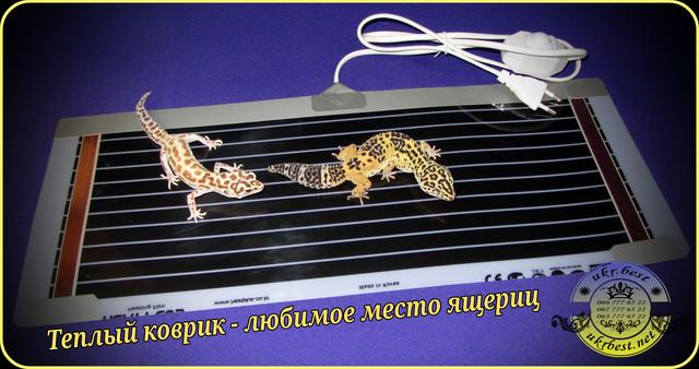 Термоковрик - террариумный обогреватель - купить от производителя UkrBest - Украина. Используется для поддержания постоянной температуры, необходимой экзотическим ящерицам для комфортного развития и жизнедеятельности.