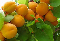 Эффективные средства защиты растений — фунгициды. Виды фунгицидов и способ применения