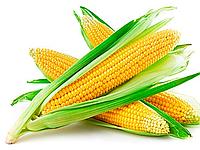 Семена кукурузы Ферум (Яблуком)