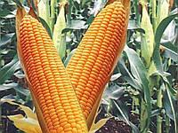 Семена кукурузы Кремень (Яблуком)