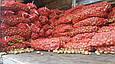Рів'єра (насіннєва картопля) Житомир II репродукція Самовивіз зі складу Мелітополь, відправка по передоплаті, фото 6