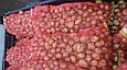 Рів'єра (насіннєва картопля) Житомир II репродукція Самовивіз зі складу Мелітополь, відправка по передоплаті, фото 8