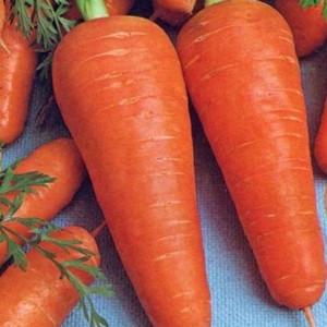 Семена моркови Курода (Франция) 0,5 кг — среднепоздняя сортовая (85-90 дней), тип Шантане
