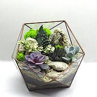 "Флорариум ""Икосаэдр"" с суккулентами, ширина -25 см, высота -23 см."