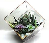 """Флорариум """"Мегакуб"""" с суккулентами, ширина -35 см, высота -38 см."""