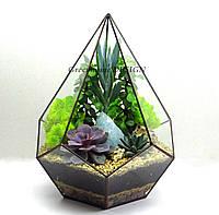 """Флорариум геометрический """"Пятиугольная пирамида"""", с живыми растениями (суккулентами)"""
