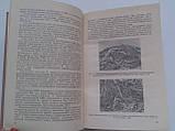 Периферическая нервная система. 10-й выпуск, фото 5