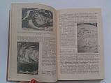 Периферическая нервная система. 10-й выпуск, фото 6