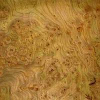 Натуральный шпон эксклюзивных пород дерева Ильм (Вяз)