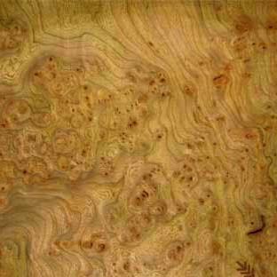 Натуральный шпон эксклюзивных пород дерева Ильм (Вяз) - Байкал - шпон в Украине в Киеве