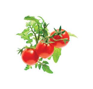 Капсулы с семенами помидоров черри, 3 шт