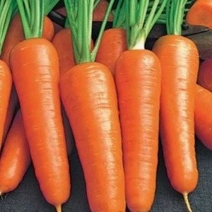 Семена моркови Ройал Шансон (Франция) 0,5 кг — среднепоздняя сортовая (100-110 дней), тип Шантане
