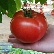 Насіння томату Сигнора F1 (250 сем.)
