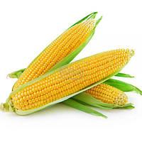 Кукуруза сахарная Брусника, 20гр.