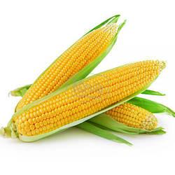 Кукуруза сахарная Брусника, 10гр Агроном