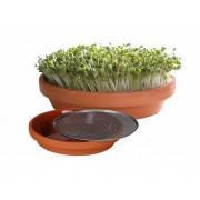 Глиняні тарілки для пророщування і мікрозелені