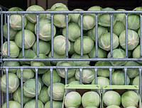 Семена капусты Калуга F1  (2500 сем)