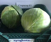Семена капусты б/к Сторидор F1 (2500 сем.) Syngenta