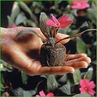 Торфяные таблетки  для старта растений и рассады цветов 41 мм