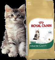 Royal Canin (Роял Канин) MAINE COON Kitten корм для котят породы мейн-кун, 4 кг