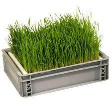 Ящики для пророщування і мікрозелені
