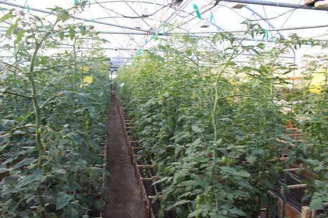 фермерские теплицы Никополь