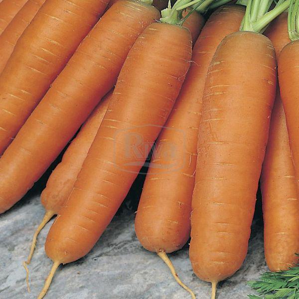 Морковь Перфекция, 10 г Агроном