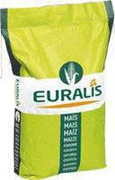 Семена кукурузы | ЕС Кубус