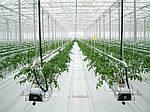 Гидропоника. Методы выращивания в прогрессивном растениеводстве.