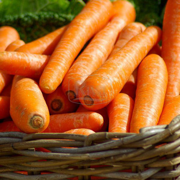 Морковь Камила, 3г