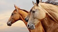 Кокосовое масло сыродавленное для  лошадей, 460 мл