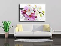"""Картина на холсте """"Орхидеи на мокром стекле"""""""