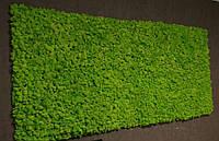Стіна з весняного моху