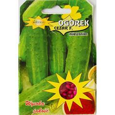 Польские семена огурца Цезарь 50шт