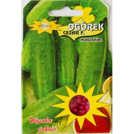 Польские семена огурца Цезарь 50шт, фото 2