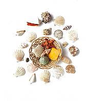 Ракушки натуральные Морской декор набор в кашпо из лозы D10 см 1 уп
