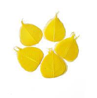 Желтые Листья сухие стабилизированные натуральные скелетированные 7-9 см 50 шт/уп